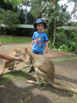 Nico and wallabie number 1