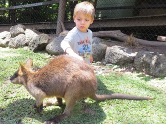 Nico and wallabie number 2