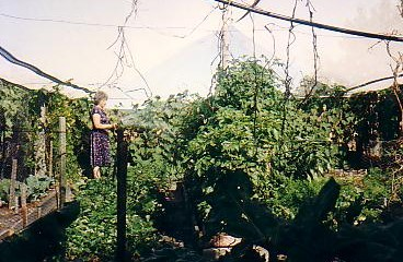 Mum watering her garden. Note the netting over the top, to stop hail damage