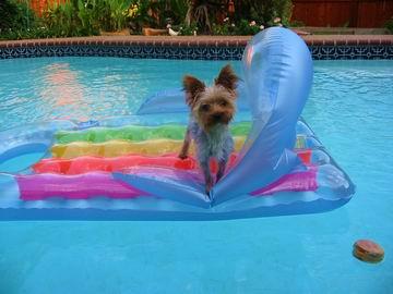Ziggy riding his air mattress.