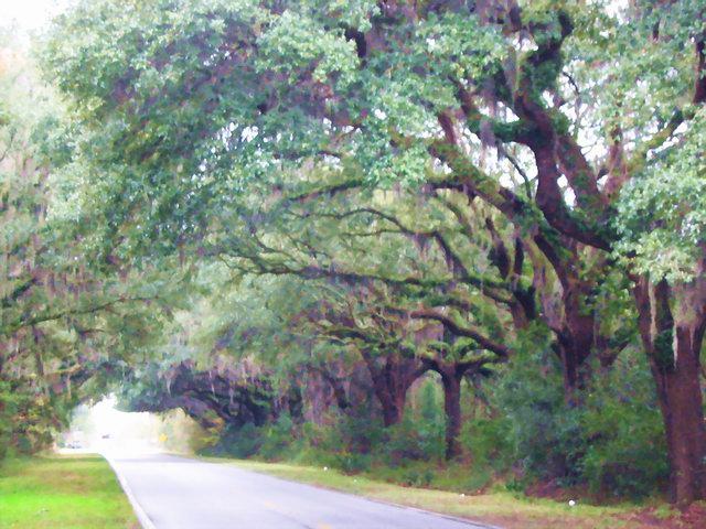 Canopy road, South Carolina.