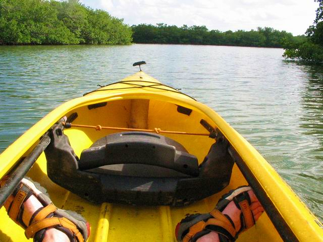 Kayaking through the mangrove islands.