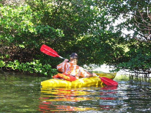 The Hawaiian shirt makes another comeback! Click on photo for story and pics of mangrove kayaking in New Zealand eleven years ago.
