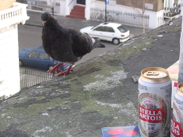 coo…coo…pigeons drinking beer on my window sill every morning at the Nevern backpackers hostel in Earls Court!